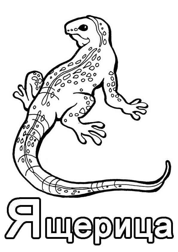 Динозавр рекс раскраска