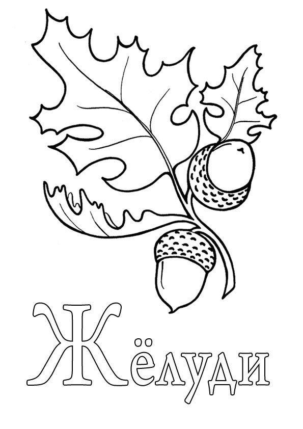 Раскраска на букву Ж