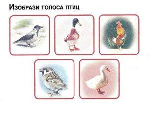 Голоса птиц и животных